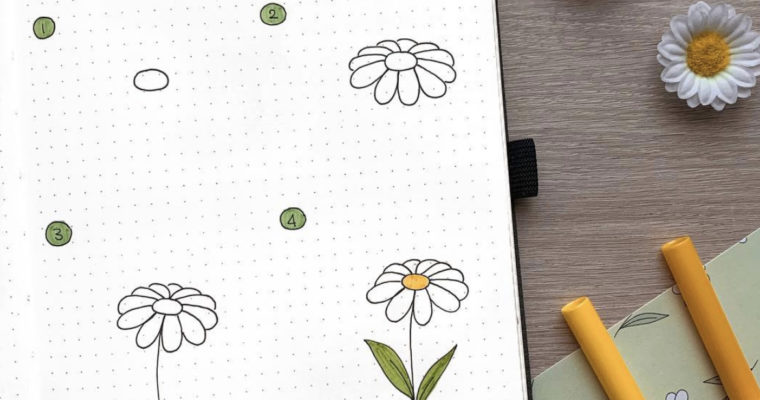 How to draw daisies step by step